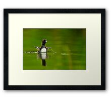 Loon Chick 11 Framed Print
