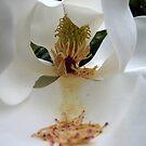 magnolia by paula whatley