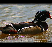 PAINTED WOOD DUCK by Madeline M  Allen