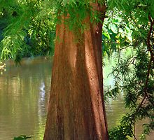 Cypress Tree by Wanda Raines