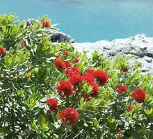 bottlebrush, land and sea by valumtimes