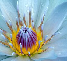 Natures Wonder by Penelope Thomas