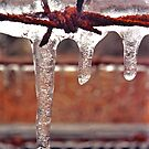 barbed ice by J.K. York