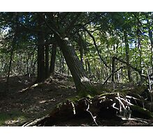 Home in the Forest Photographic Print