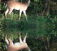 Deer Reflection by Rick  Friedle
