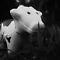 B&W, Black and White Cow by Diana Forgione