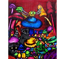 raccoon in a mushroom patch Photographic Print