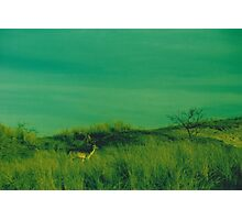 Deer in the dunes - Cross Processed Photographic Print