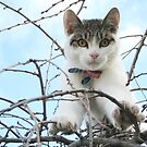 Billy in a Tree by Tracey McKenzie