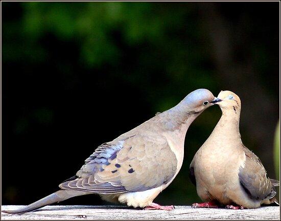 That lovey-dovey feeling by Earl McCall