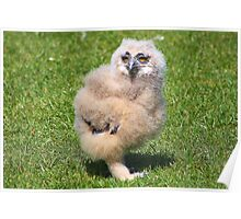 Baby Owl 4 ( one of four ) Poster