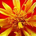 Yellow but not Mellow by buddykfa