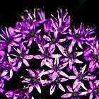Purple Petals by buddykfa