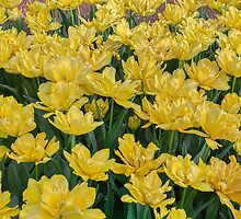 Yellow Tulip Display by Elaine Teague