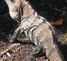 Mr. Iguana by John Michael Sudol