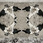 Dead Magpie by wellman