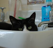 Binky in the Sink by ApeArt