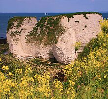 Old Harry Rocks! by RedHillDigital