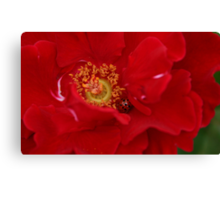 A Rose For The Lady Canvas Print