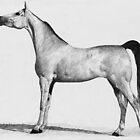 Dappled gray Arabian mare by Joseph Barbara