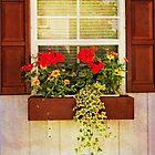 The window box by vigor