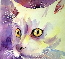 Gatto bianco (White cat) by miriam17