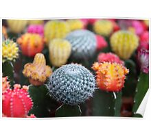Cactus and Flowers - Pink Green Blue Yellow  Poster