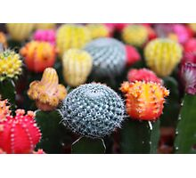 Cactus and Flowers - Pink Green Blue Yellow  Photographic Print