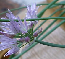 Chives by Rebekah  McLeod
