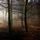 Badminton woods  by greenbunion