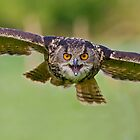 European Eagle Owl by greenbunion