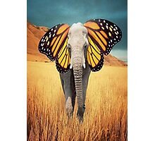 Butterfly Elephant Photographic Print