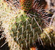 Scarlet Cactus by Benjamin Padgett
