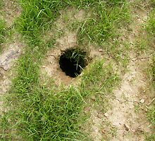 Groundhog Hole by Cathy Cale