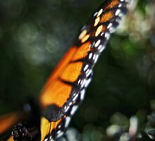 Butterfly Bokeh by SD Smart