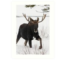 Moose on the Move Art Print