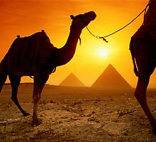 The Pyramids of Giza have survived the centuries as lasting symbols of Egyptian culture. The same might be said for the sturdy camels that haul visitors around to see the area's many wonders. by alanalan