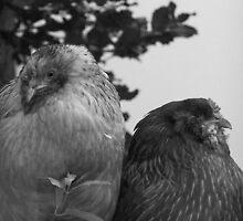 Chickens by Nancy Aldrich