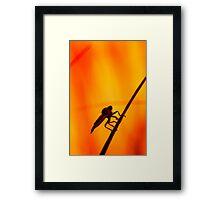 Robberfly Framed Print