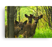 """Old Friends, and a """"Brand-new"""" Friend :) Canvas Print"""