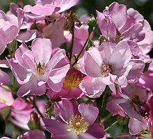 Mass Of Roses by Joy Watson