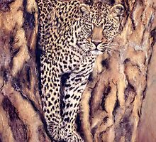 Camouflage - Leopard in Yellow Fever Tree by Angela Drysdale