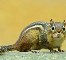 Indian Palm Squirrel by tshirtdesign