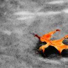 Golden Leaf on Frozen Pond by Shelley Neff