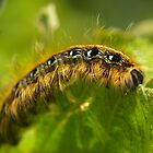 Hungry Caterpillar by Gaby Swanson  Photography