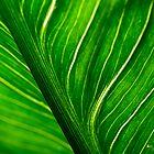 Leaf by John Narun