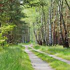 Forest Track by Gaz Gazmajster