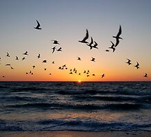 The Birds at Sunset - Clearwater Beach, Florida by LaWatha Wisehart