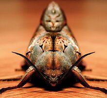 Moth by Gareth Chalklen