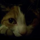 Maralyn (my cat) by artBarfuncle